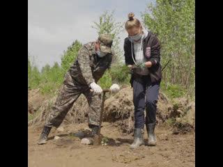 6000 сосен в честь героев Иркутской области