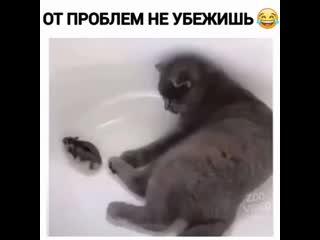 Неудачная попытка побега )))