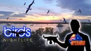 Birds in flight The best nightclub in Darwin With the DJI Mavic Air Drone Drone Kings in Darwin