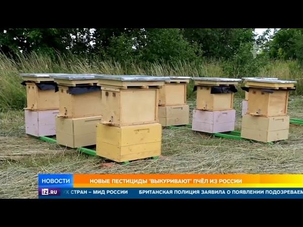 Лужков пожаловался на гибель своих пчел из-за пестицидов