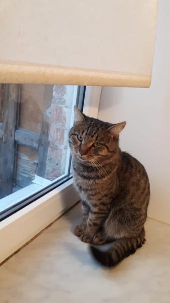 Ушёл кот Брюс ли в ноябре 2019 в районе черниковки Богдана Хмельницког
