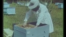 Пчеловодство Учебный кинокурс
