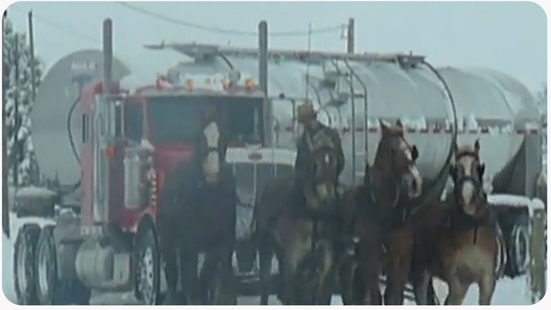 Amish Man and Horses Save Milk Truck | Holiday Throwback Thursday