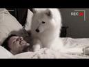 Хозяин установил камеру чтобы понять, почему пес всю ночь смотрит на него, то что он узнал поразило