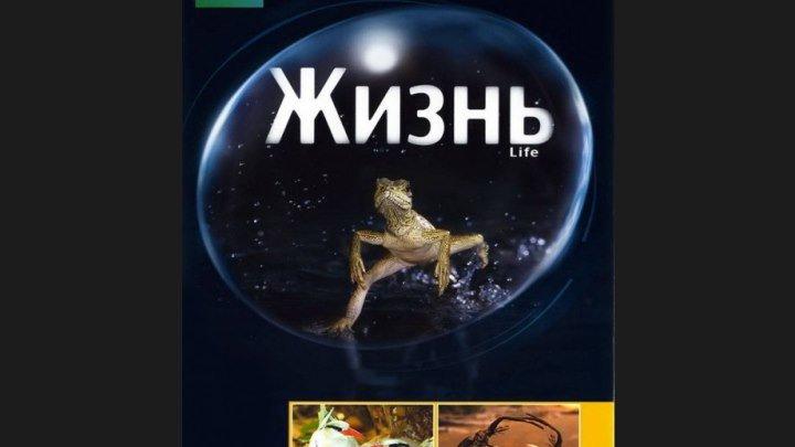 BBC Жизнь 1 2