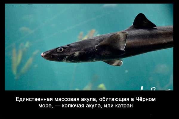 Valteya - Интересные факты о акулах / Хищники морей.(Видео. Фото) - Страница 2 A_0swWPnhvk