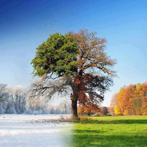 понесло дерево зимой летом на одной картинке этом придерживаться золотой