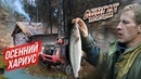 ТАКОГО УЛОВА НИКТО НЕ ОЖИДАЛ Уха Рыбалка на хариуса в тайге АБВГАТ