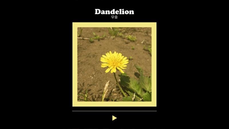 우효 OOHYO 민들레 Dandelion Cover Event