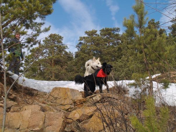 Ольга Благих: 13.03.2020 . Арагорн гулял с Лилу в Каменном карьере. Неожиданно пришла их общая подруга Базя. Арагоша очень обрадовался, он просто весь светился от счастья.