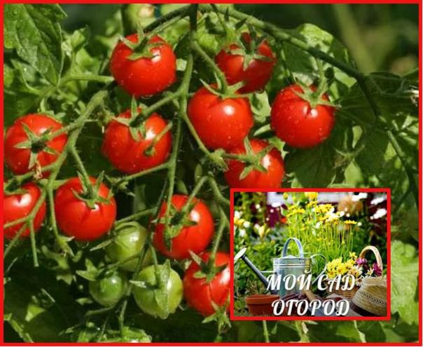 Влияние условий внешней среды на поступление питательных веществ в растения