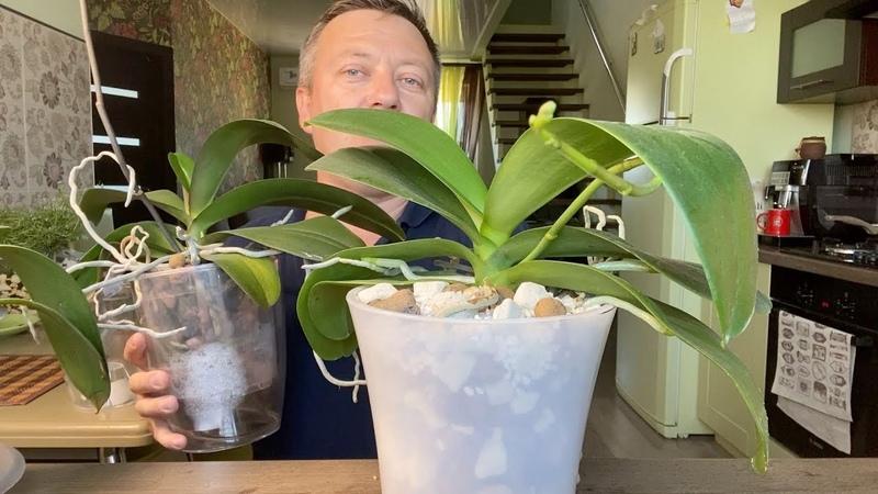 удобрение орхидей цветущей или зимой можно или нет