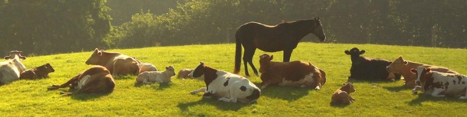 Картинки коровы лошади овцы