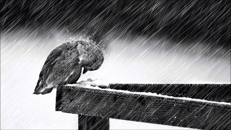 Cold - Jorge Mendez (1 Hour Mix with Subtle Rain) [Saddest Piano Violin Ever]