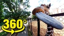 Московский зоопарк VR 360°