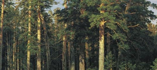 Тест: Угадайте классика по описанию природы