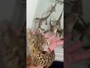 Baby Crocodiles sound like Galaga