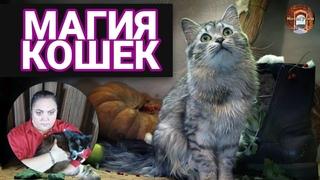 Как кошки лечат людей? Кошки видят призраков? Кошачья магия.