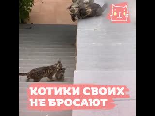 Котики своих в беде не бросают