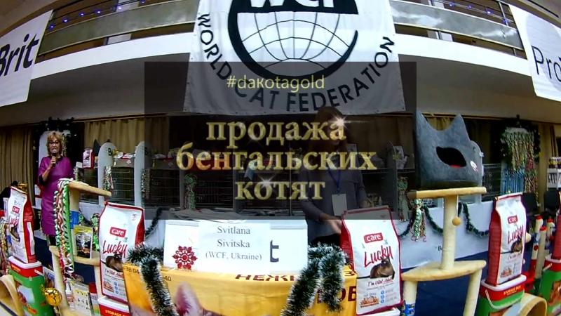 5, Выставка кошек, Харьков, ДК ХТЗ, 14 15 декабря, 2019, WCF, Best