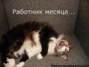 Фотоальбом Татьяны Чистяковой