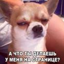Фотоальбом Светланы Николаевой