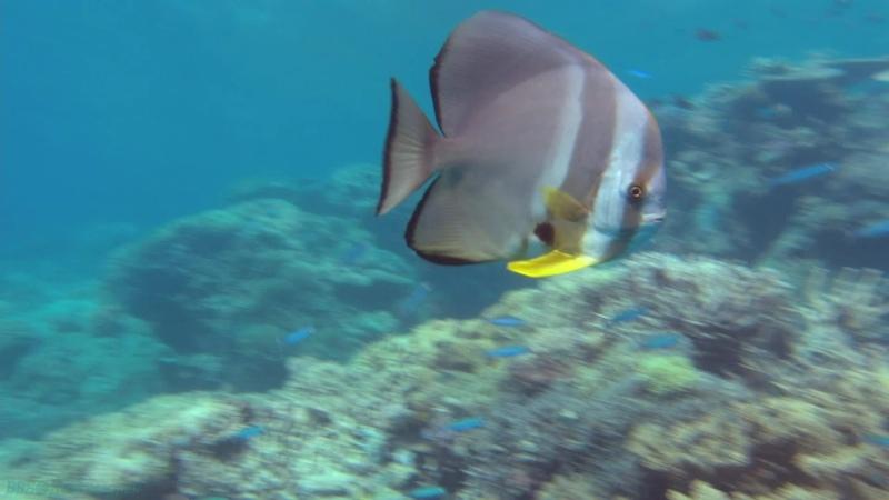Чудеса океана Научно познавательный природа путешествие 2003