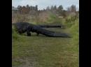 Крокодилы вышли на охоту