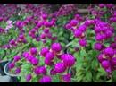 HD PATTAYA Nong Nooch garden overview