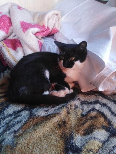 Найден  котик, возраст где-то 6 месяцев, на выселк...