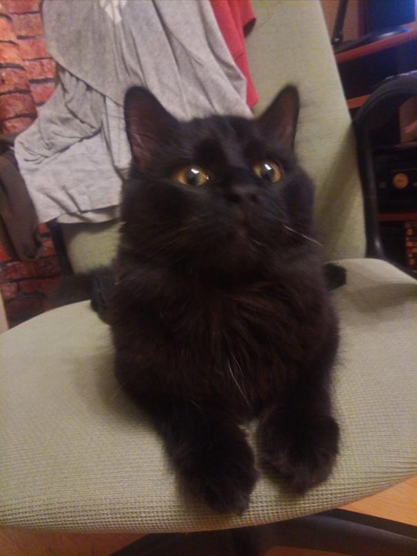 С-Пб.Котик ищет дом!!! Кот оказался на улице перед новым год...