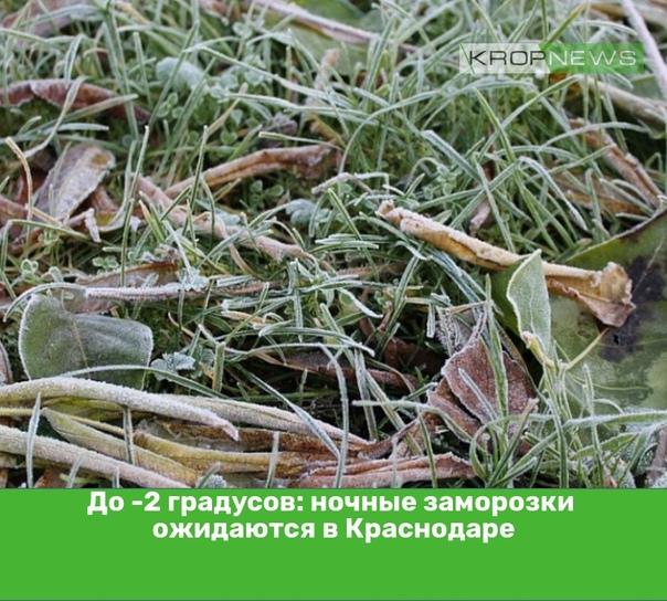 До -2 градусов: ночные заморозки ожидаются в Красн...