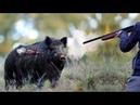 Загонная ОХОТА на кабана 2020! Красивые выстрелы. Driving HUNT on a wild boar 2020 !Beautiful shots