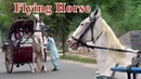 Horse Carriage Driving Traditional Transport | Horse Cart Horse Carriage Rental | Abdul Majeed Batti
