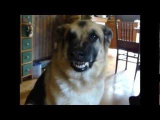 Funny Dog Smiling & Talking