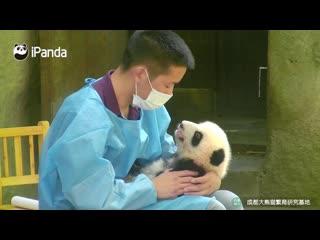 Милые пандята и их няни