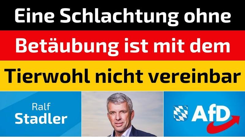 Ralf Stadler AfD Eine Schlachtung ohne Betäubung ist mit dem Tierwohl nicht vereinbar