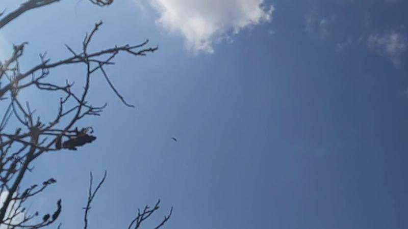 Наш Орлик летает 02 05 20 г