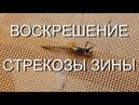 Воскрешение Стрекозы Зины The resurrection of a dragonfly 14 09 19