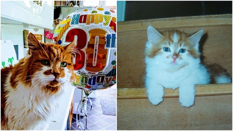 Meet Rubble the oldest cat in Britain has just celebrated his 30th birthday