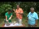 О Таитянском соке НОНИ который лечит онкологию и дает молодость людям ...