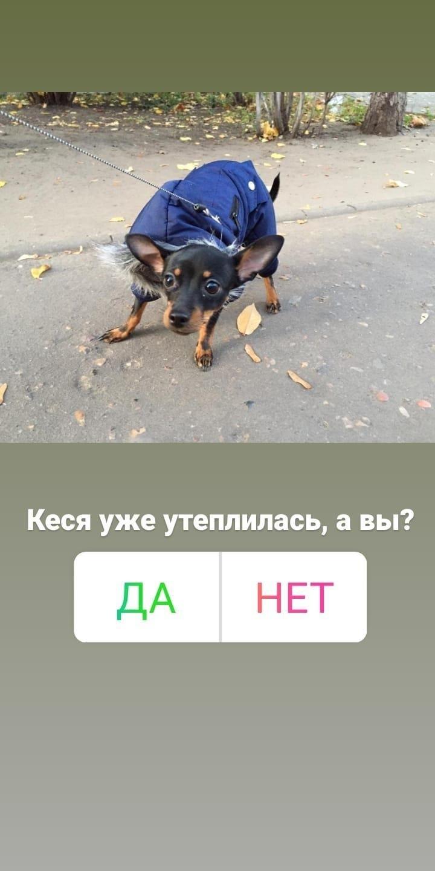 Кейс: продвижение стартапа по выгулу собак, изображение №4